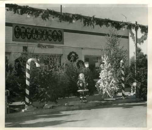 Christmas-tree-lot-at-Jennings-Lawn-&-Garden-1955-794219.jpg